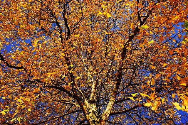 Lattialämmitys on ajankohtaista syksyllä